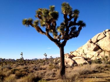tree-desert-camping